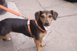 Pes na vodítku - penzion U Výletů